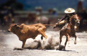 pulling bull tail
